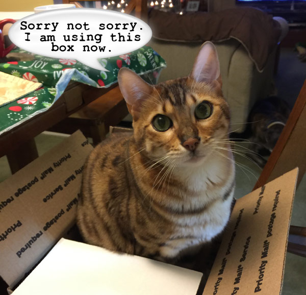 Cat Box Christmas / AboutVetMed.com