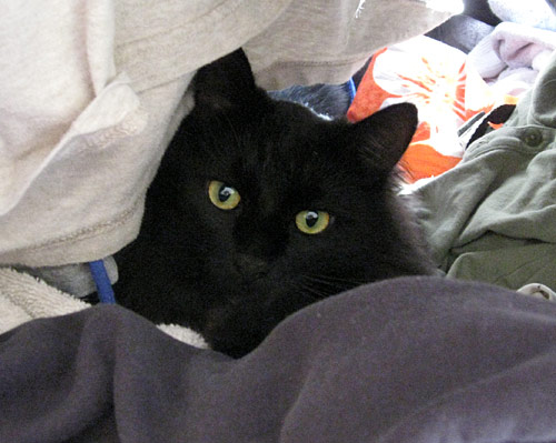 Laundry loving cat
