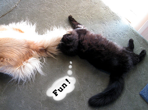 It's furry, it moves, let's play!