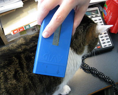 Scanning the clinic cat for his microchip © Janet Tobiassen Crosby DVM