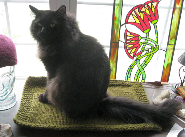Window version of the Cat Mat, modeled by Barnie