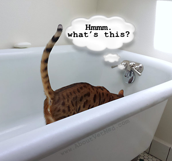 Quincy explores the bathtub