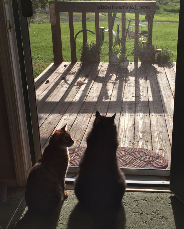 Kitties, watching the world go by - www.aboutvetmed.com