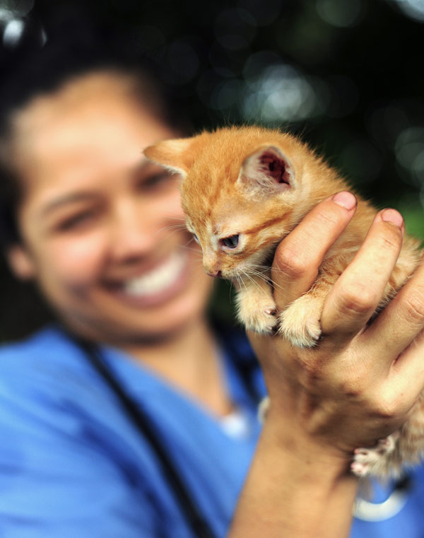 World Vets provides veterinary care for animals that would otherwise have none